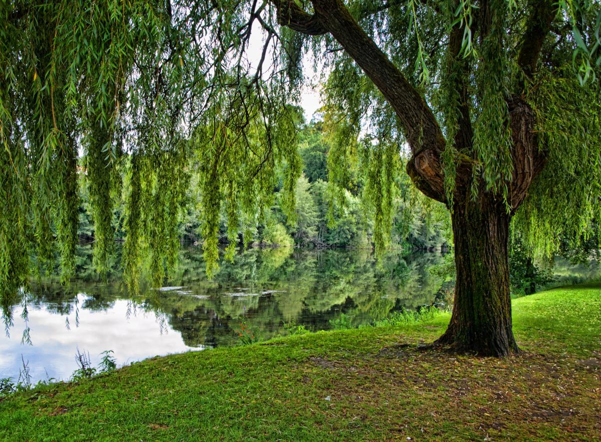árboles Isaías 555